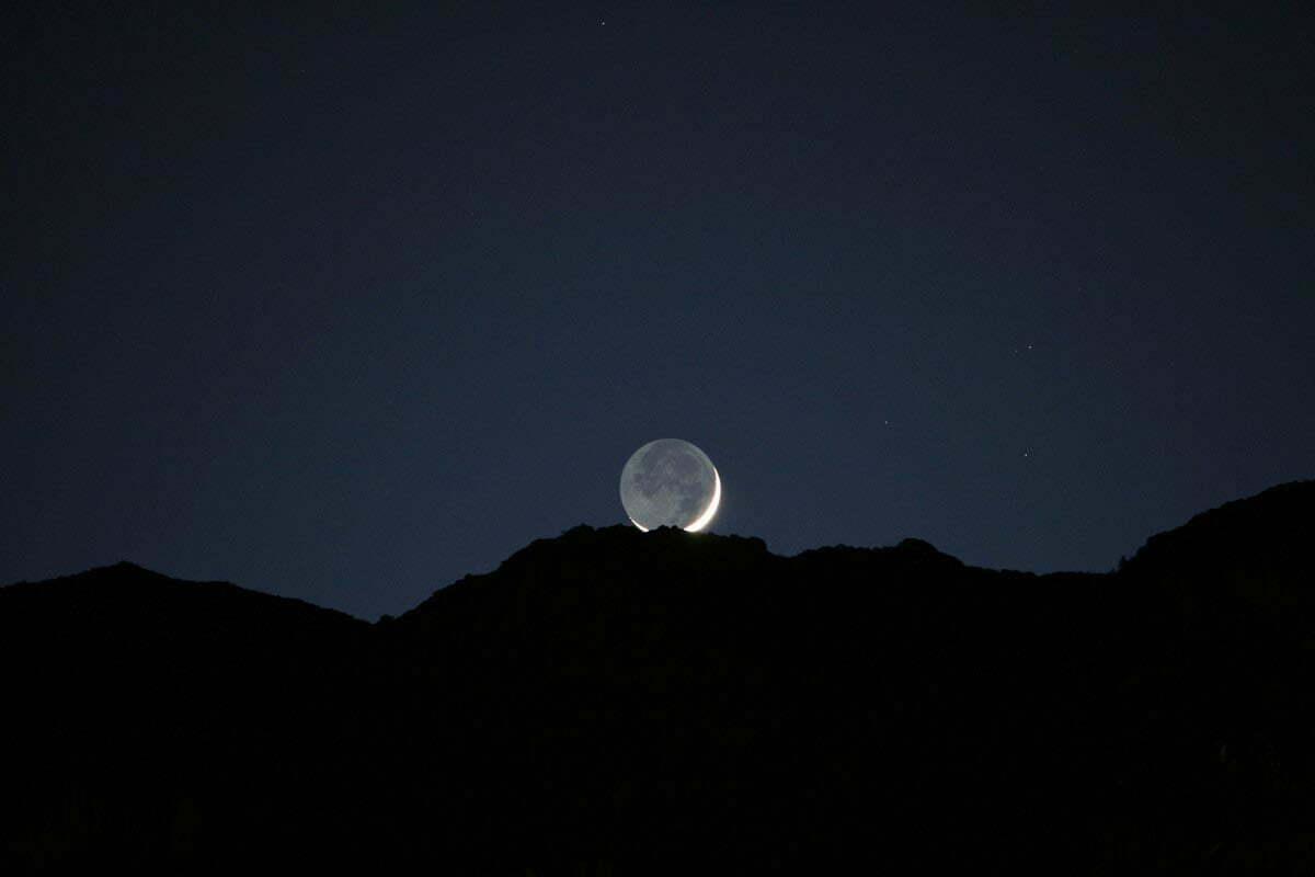 palm-moon