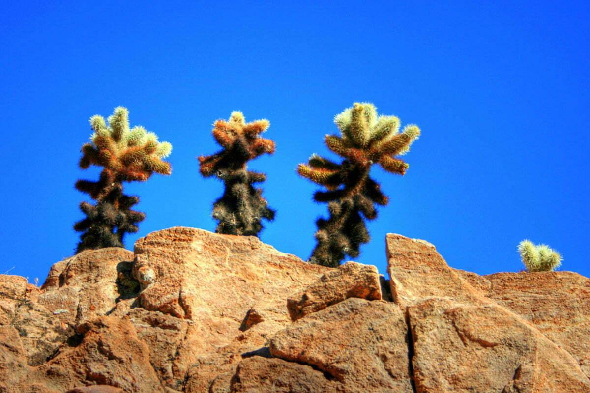 cactus-ledge