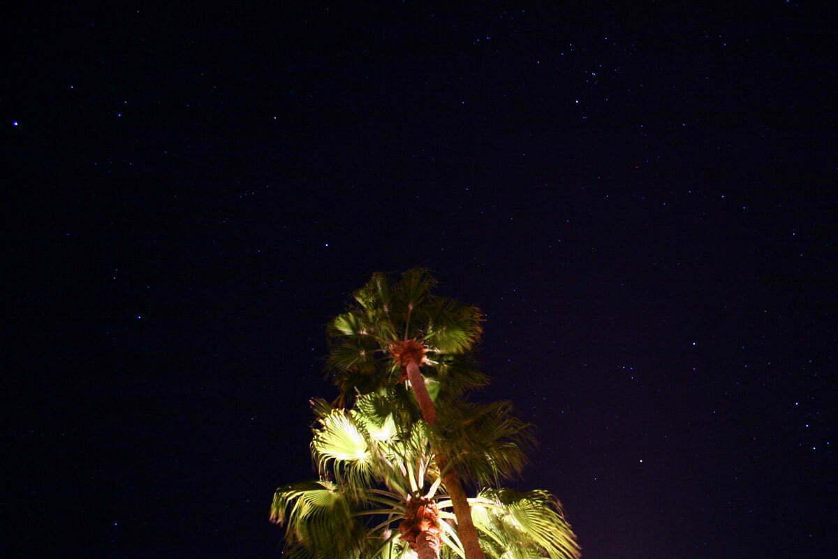 palm-spring-stars