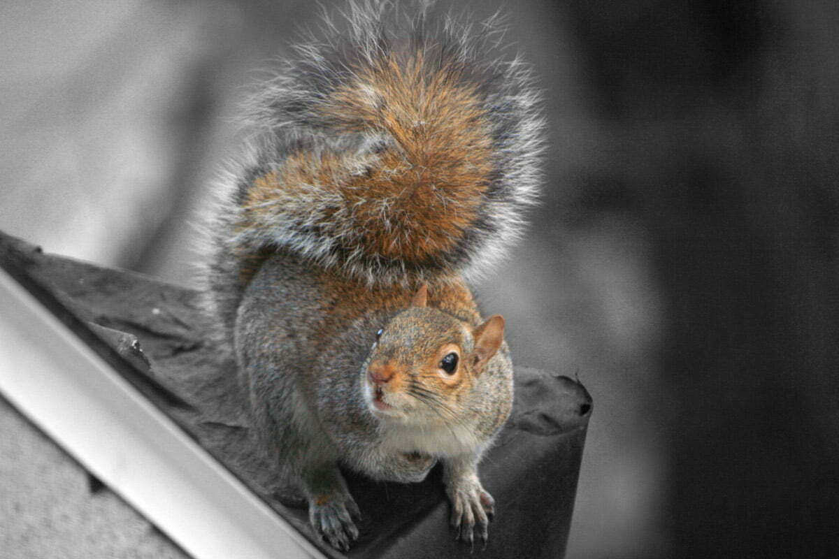 squirrel-looking-up