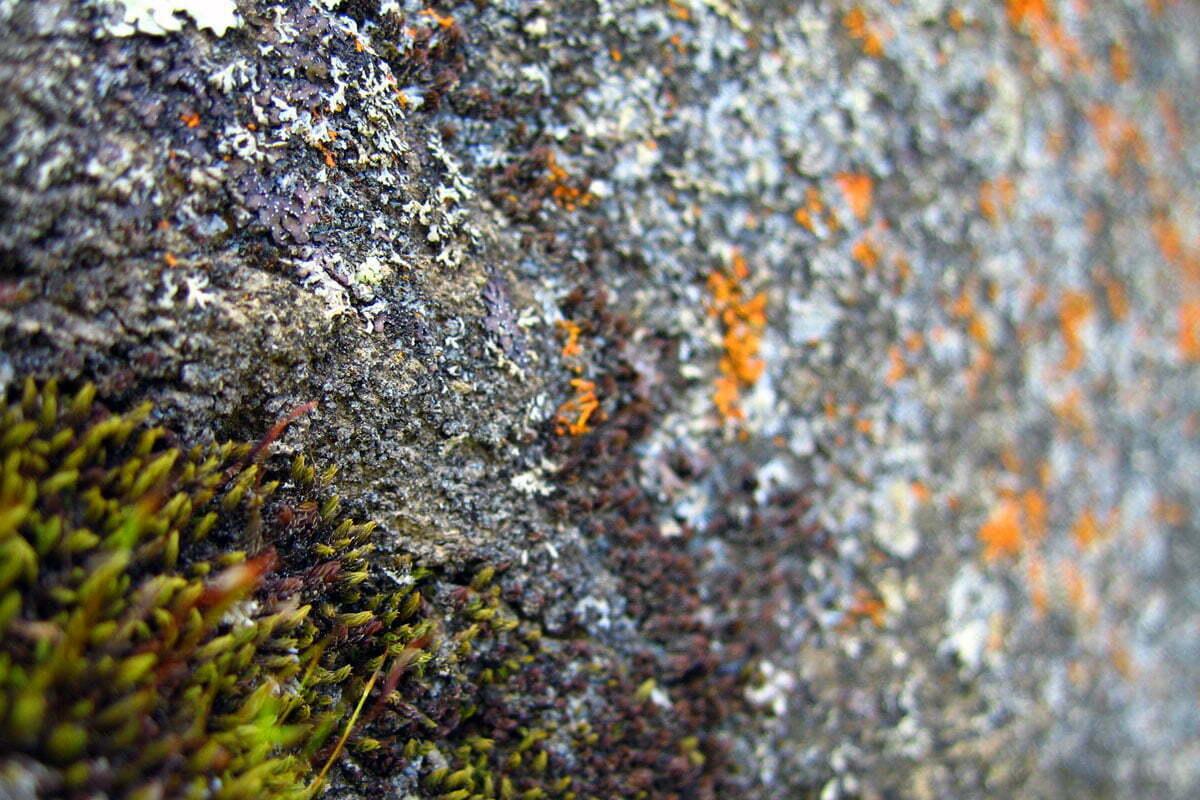 rock-moss