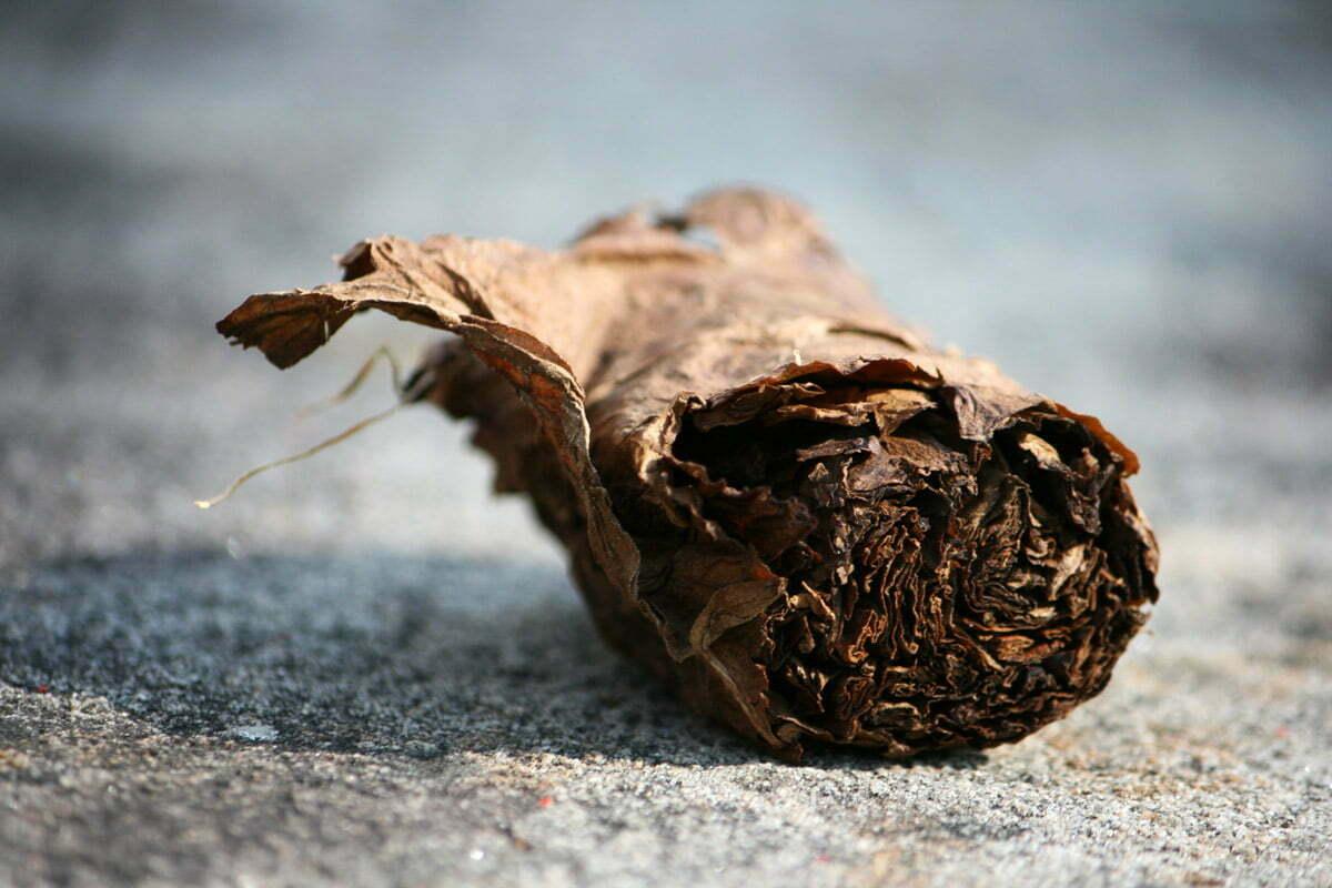 discarded-cigar