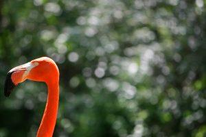 lone-flamingo