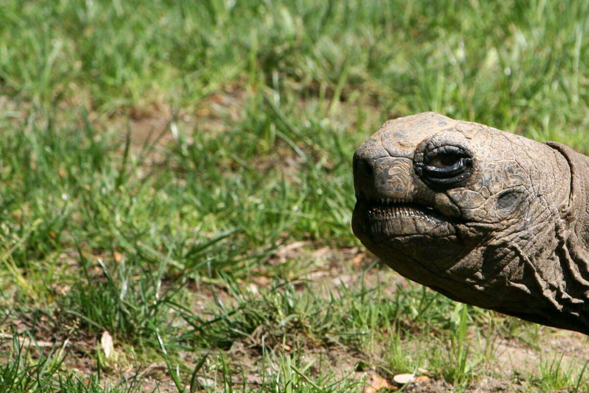tortoise-glare