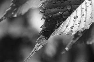 wet-leaf