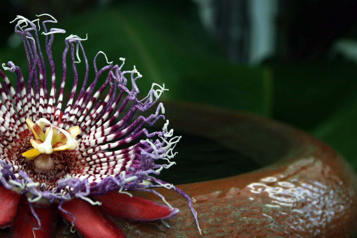 water-flower-botanic