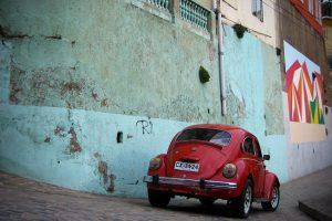 chilean-bug