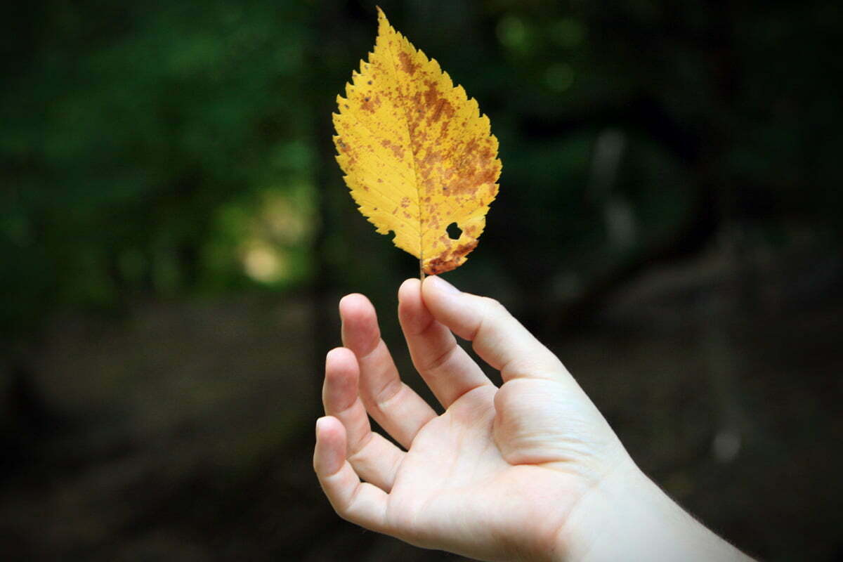 holding-yellow-leaf