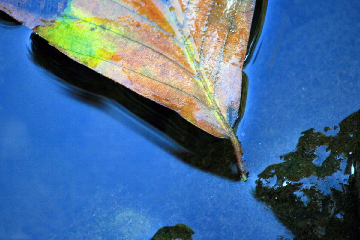 submerged-leaf