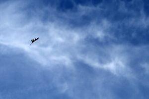 airborne-leaf