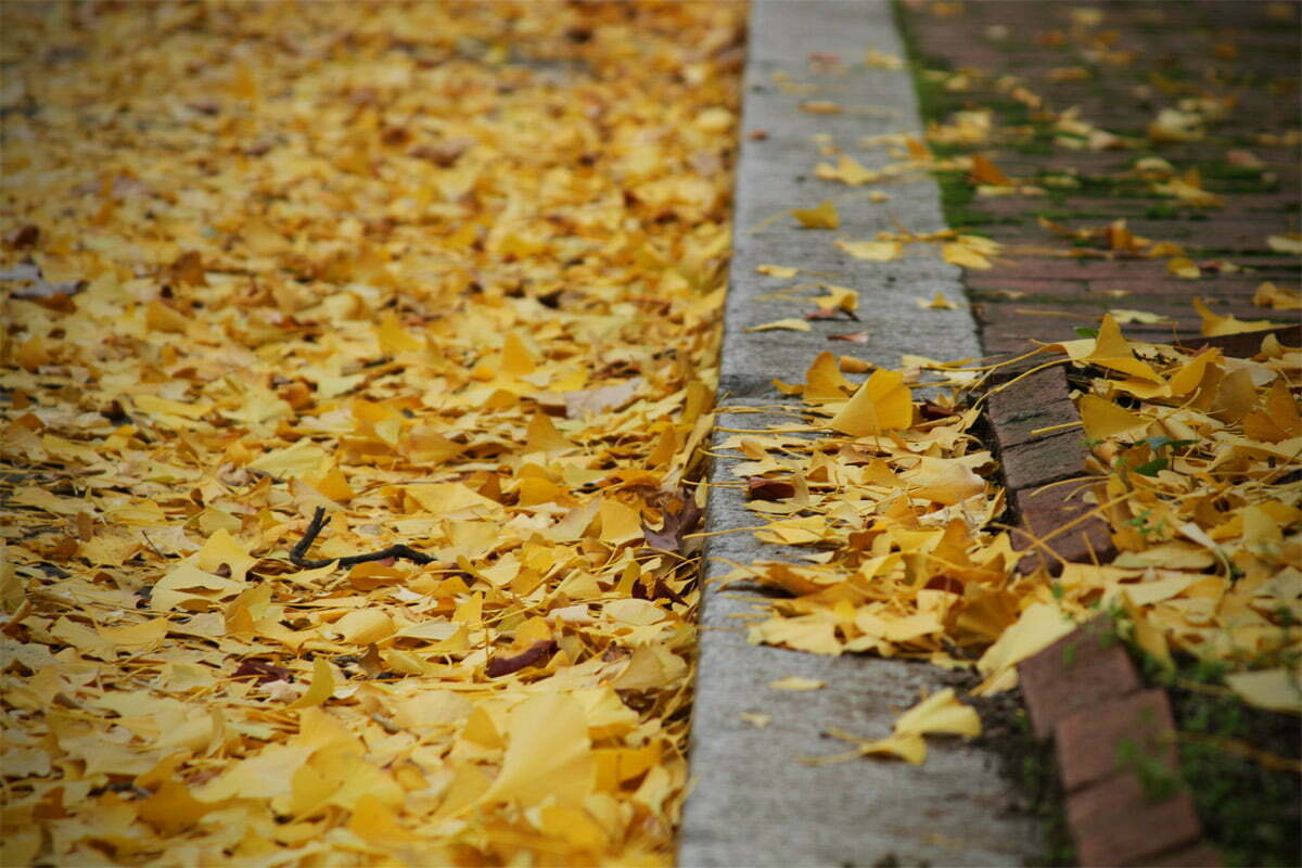 leaves-on-riggs