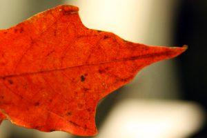 luminous-fall-leaf