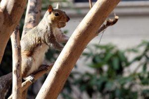 perching-squirrel