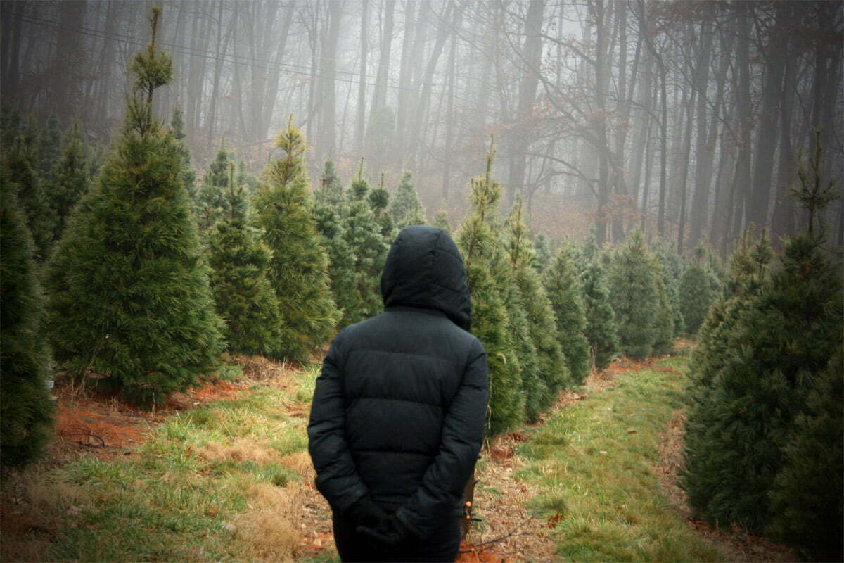 xmas-tree-stroll