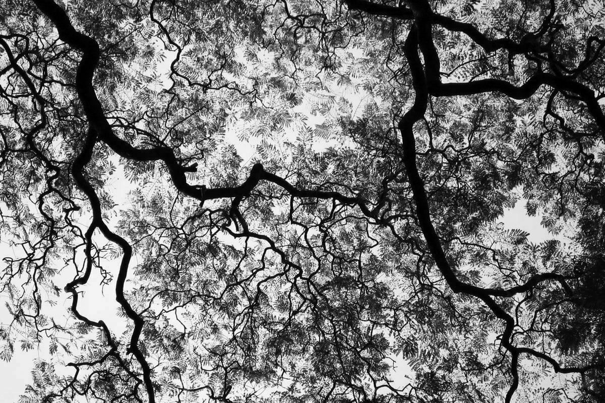 A black and white image of the tree canopy an urban parks in Buenos Aires, Argentina.
