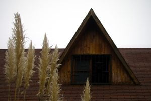 The roof of a country home behind a few stalks of tall grains.