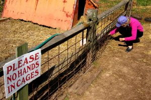 "A woman pets an animal through a cage near a sign that clearly reads ""Please No Hands in Cages"""