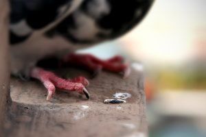 A close-up of a pigeon's feet and toes on a ledge in Dupont Circle.