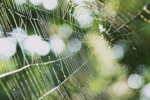 A complicated web from a spider swings in the breeze with a green background in Annapolis, Maryland.