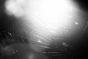 A closeup black and white photo of a spider's web in the sun.