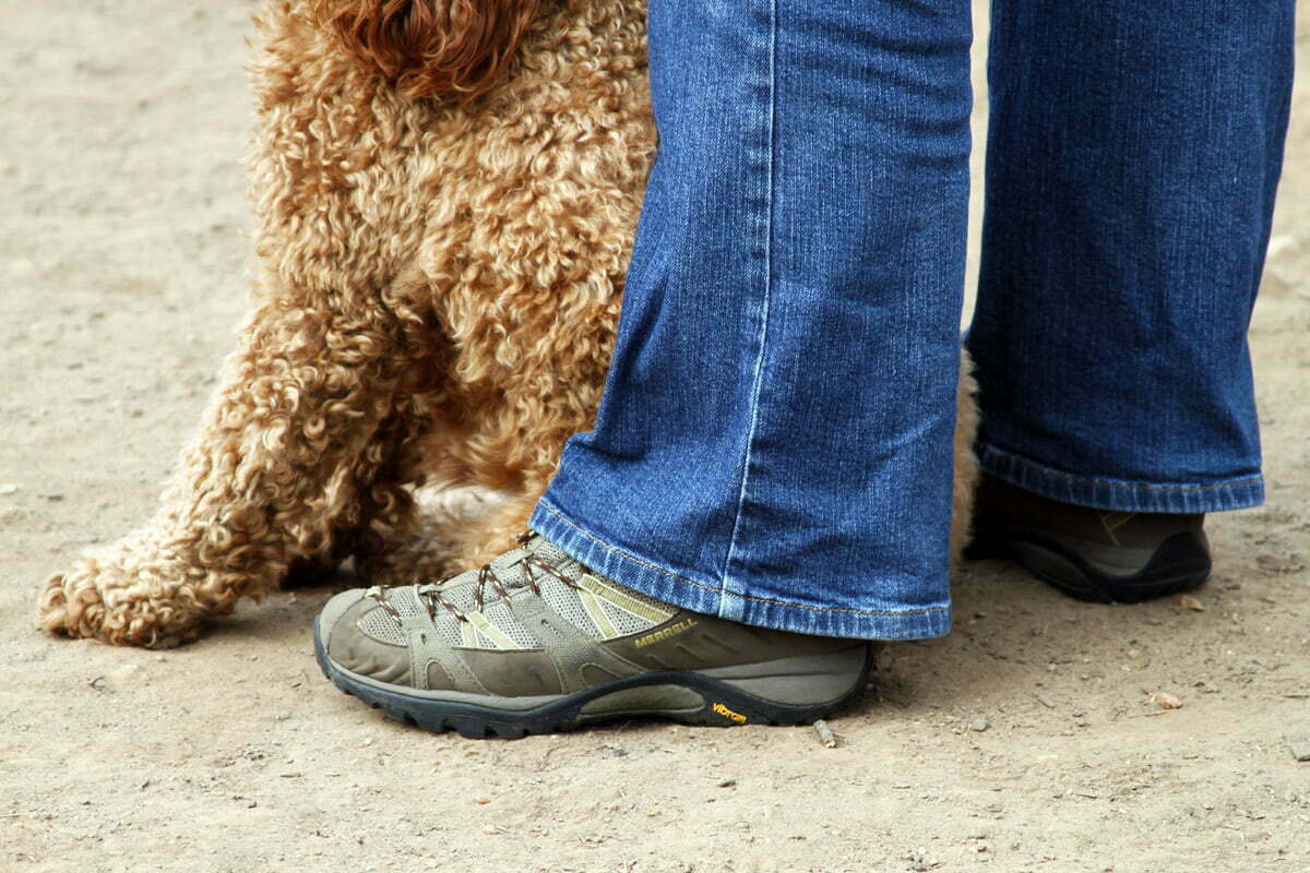 An owner stands over her dog while it sits between her legs.