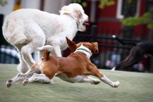 A few dogs run vigorously through the park.
