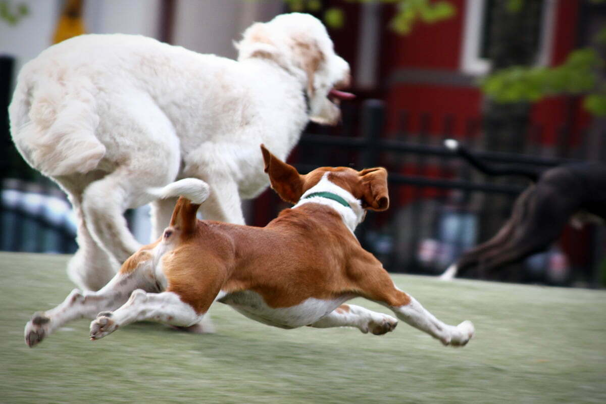 A few dogs run vigorously through the park.