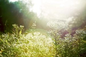 A wild field of plants and flowers basked in the Maine sunlight.