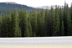 Mountains and an evergreen forest is seen beyond a Colorado highway.