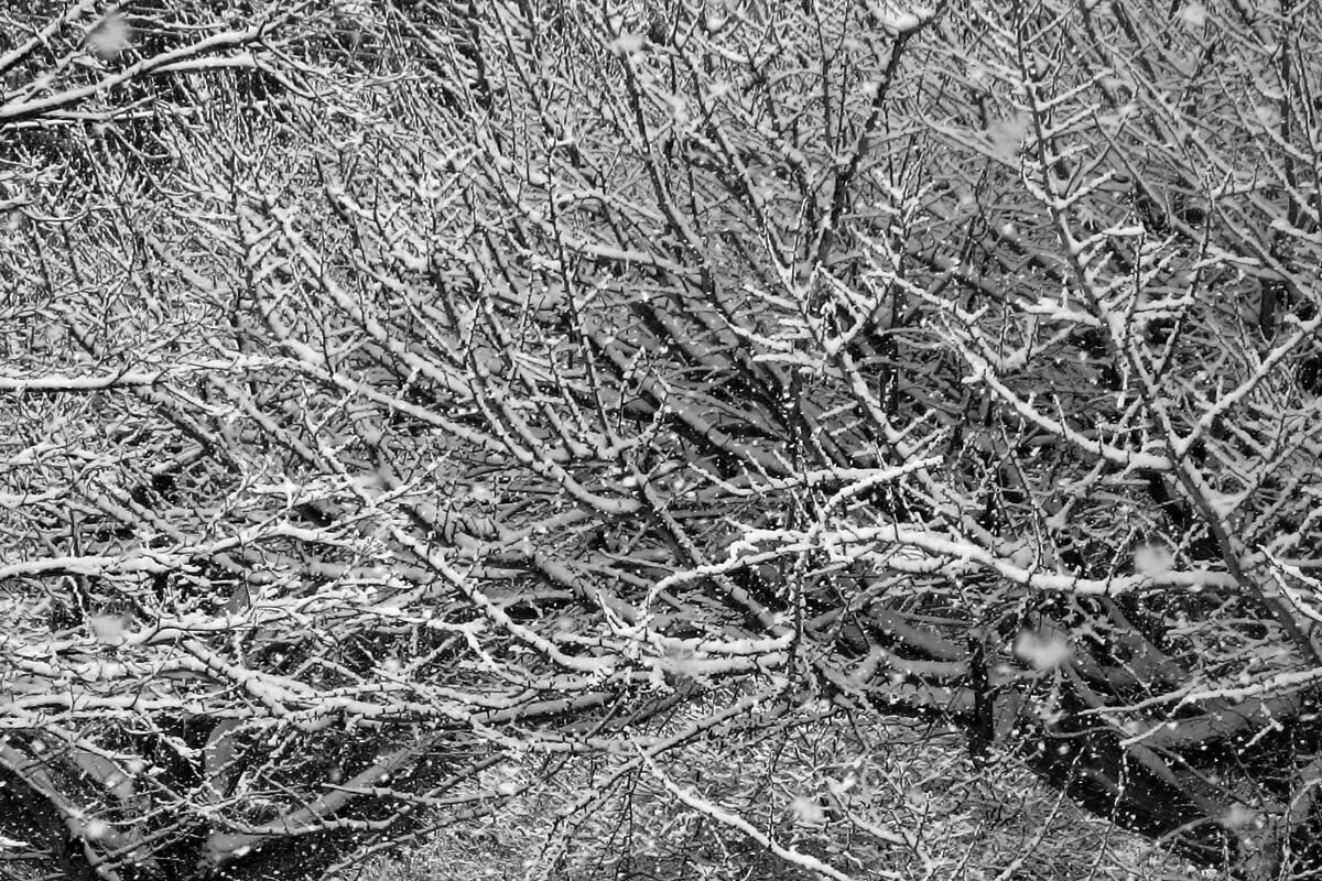 Tree limbs covered in snow during a heavy storm.
