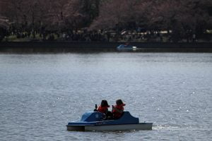Two people on paddle boats use their phones in the Tidal Basin in Washington DC.