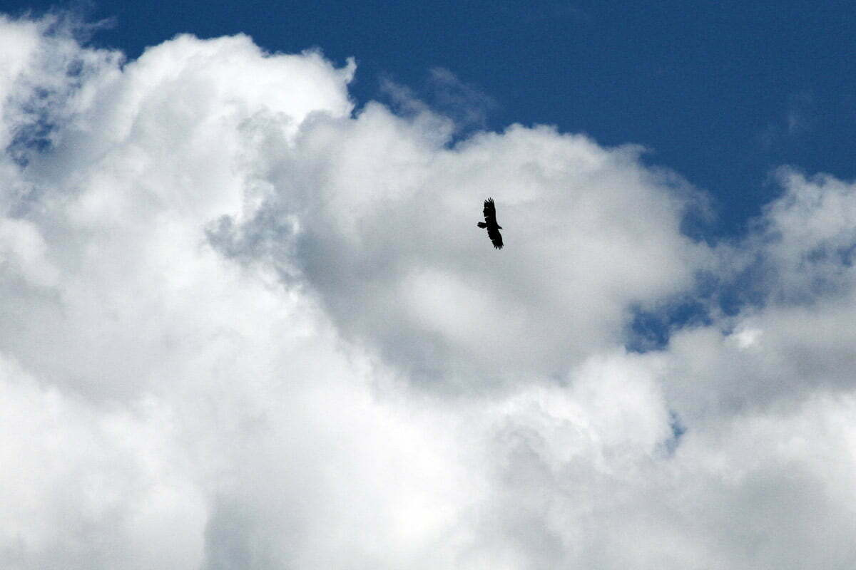 The shadow outline of a bald eagle flying high against some clouds and a blue sky.