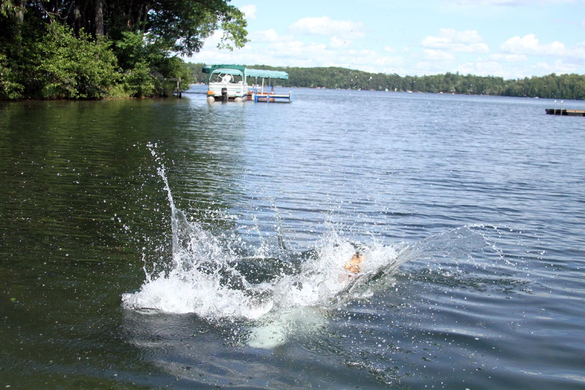 A wet Golden Retriever leaps into a lake on a sunny summer day. Photograph number six in a series of seven images of the jumping sequence.