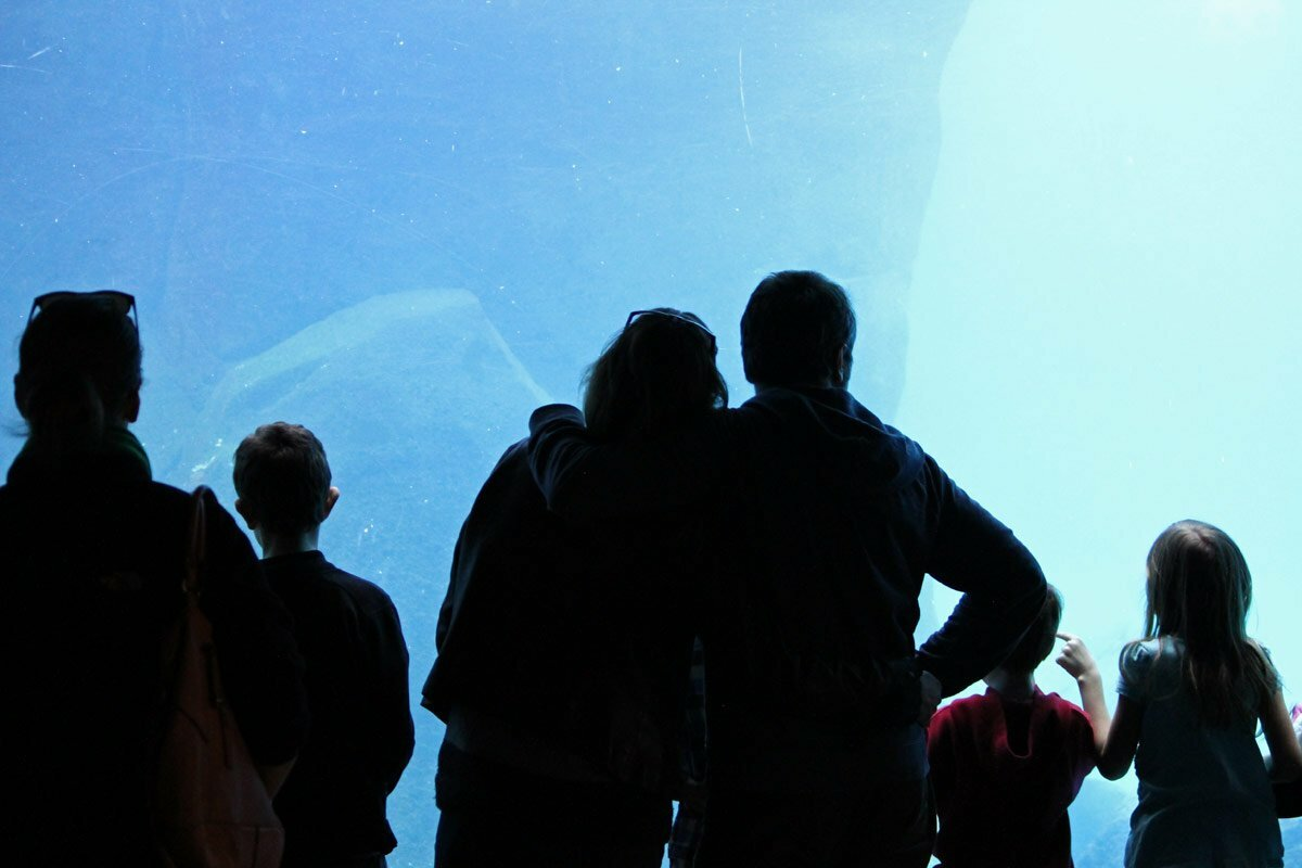 The silhouette of a family against the glass of an aquarium at the National Zoo in Washington DC.