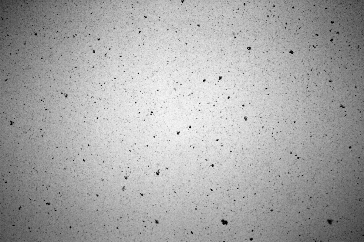 A black and white image of large snow flakes falling from the sky.