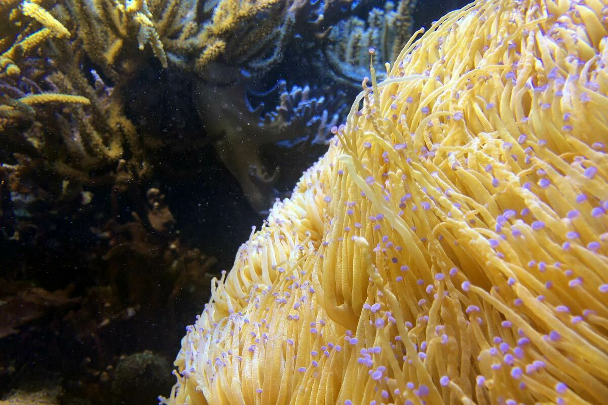 A vibrant underwater scene of coral, polyps and anemones on the last day of the Invertebrates House at the National Zoo in Washington DC.