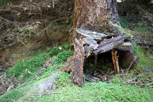 A fairy house made of sticks, bark and moss is seen on the forest hiking trail along Monhegan Island in Maine.