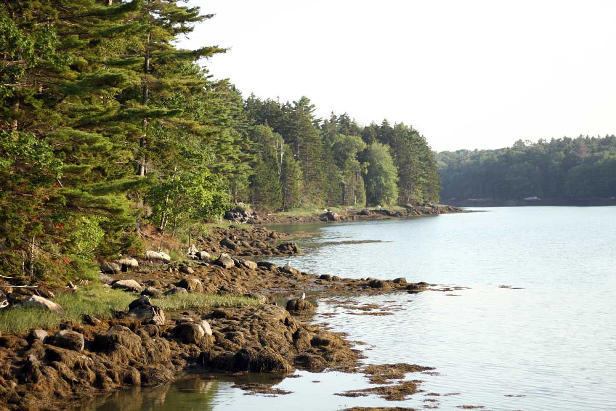 The rocky coast where the Maine forest meets the water.