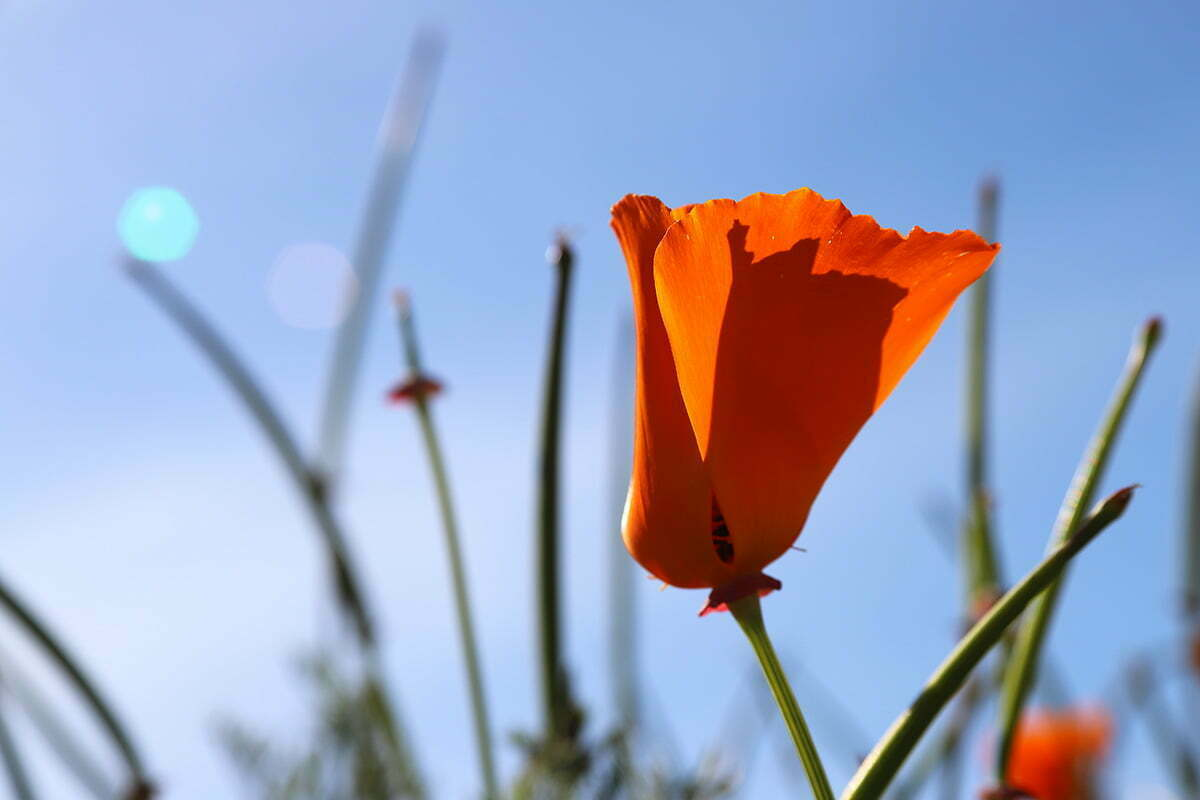 A side view of the petals of an orange flower with the sun shining and a blue sky.